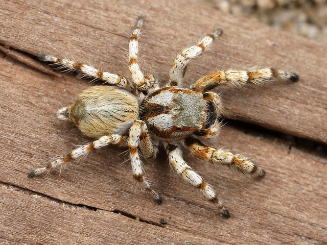 4 natural ways to get rid of spiders in your home for How to keep spiders out of your bedroom